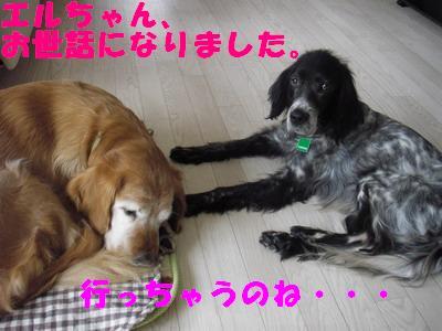 2009-01-31-2.jpg